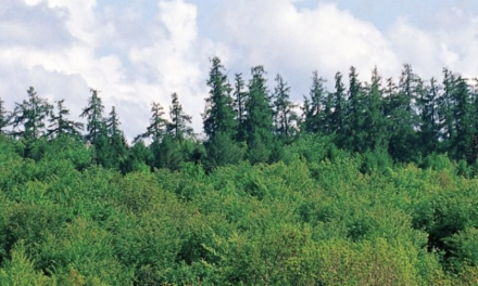 Parcelles forestières